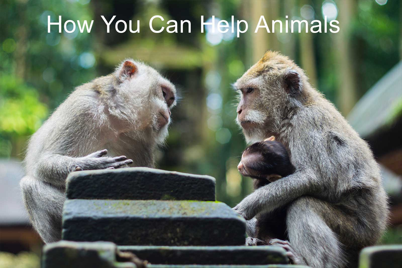How to help animals 86